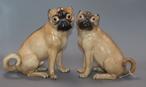 Two 19th century Meissen pugs tallest 24cm (one a.f.)