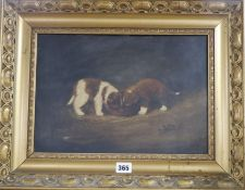 F H C 1906, oil on board, Two St Bernard puppies eating from a bowl, monogrammed and dated, 25 x