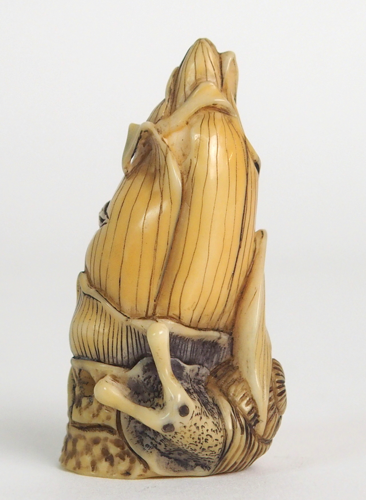 Lot 65 - A JAPANESE IVORY NETSUKE coloured and carved with a snail wrapped around a corn tassle, signed, 5m