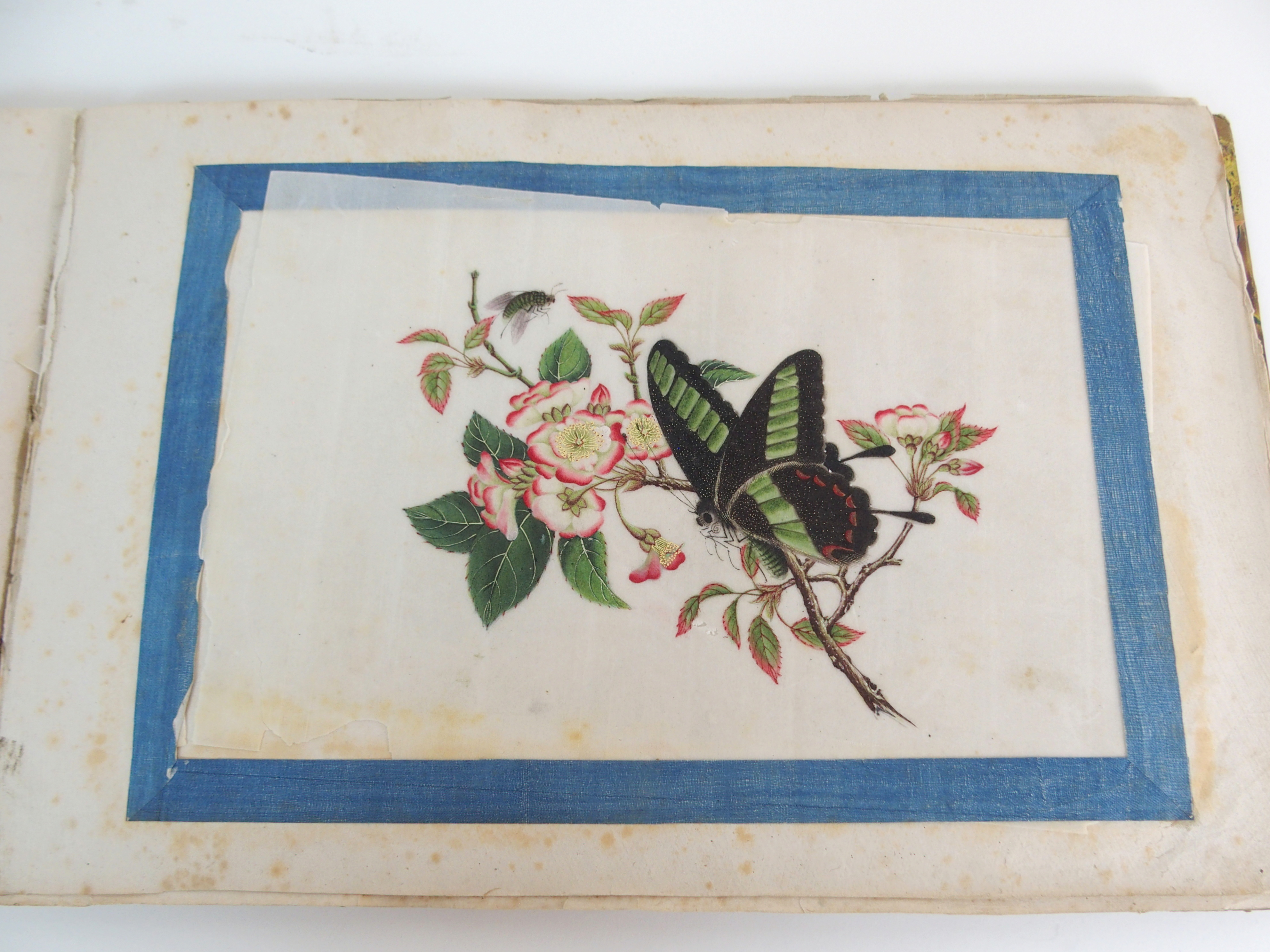 Lot 67 - ELEVEN CHINESE BOTANICAL AND INSECT WATERCOLOURS the specimen flowers with insects,on pith, 14 x