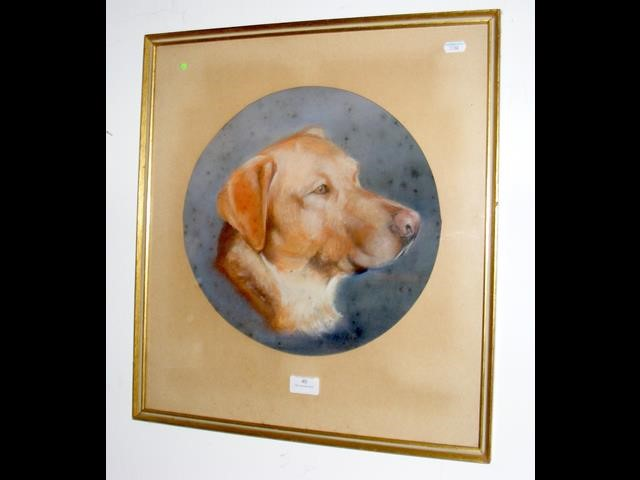 Lot 40 - A circular pastel depicting dog - possibly Golden