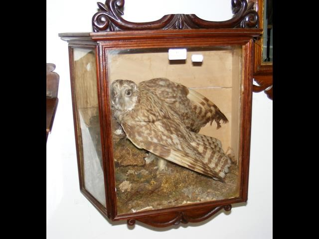 Lot 41 - A taxidermy of bird of prey in Victorian mahogany