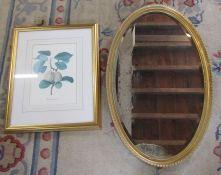 Gilt framed oval mirror & a framed botanical print