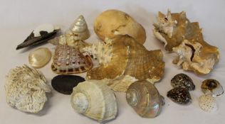 Selection of large shells