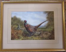 Framed watercolour of a pair of pheasants by Lincolnshire artist Peter Robinson (62 cm x 49 cm )