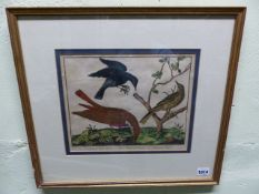 AFTER MARTINET. FOUR ANTIQUE HAND COLOURED ORNITHOLOGICAL PRINTS. 24 x 29cms. (4)