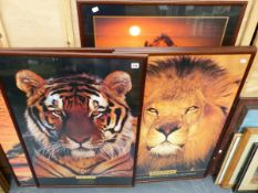 A GROUP OF SIX COLOUR PRINTS AFRICAN WILDLIFE.