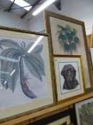 A WATERCOLOUR OF A LABRADOR AND THREE FURNISHING PRINTS.