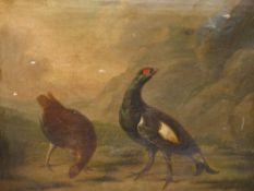 ATTRIBUTED TO STEPHEN ELMER. 19th.C.ENGLISH SCHOOL. TWO BLACK GROUSE, OIL ON CANVAS. 37 x 43cms.