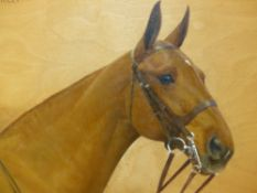 FRANCES M HOLLAMS. (1877-1963) ARR PORTRAIT OF A HORSE, YELLOW MOLLY, SIGNED AND DATED 1934 , OIL ON