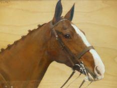 FRANCES M HOLLAMS. (1877-1963) ARR. PORTRAIT OF A HORSE, SUN SUN, SIGNED OIL ON BOARD IN MAPLE