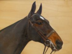 FRANCES M HOLLAMS. (1877-1963) ARR. PORTRAIT OF A HORSE, PUNCH, SIGNED OIL ON BOARD. 34 x 45cms.