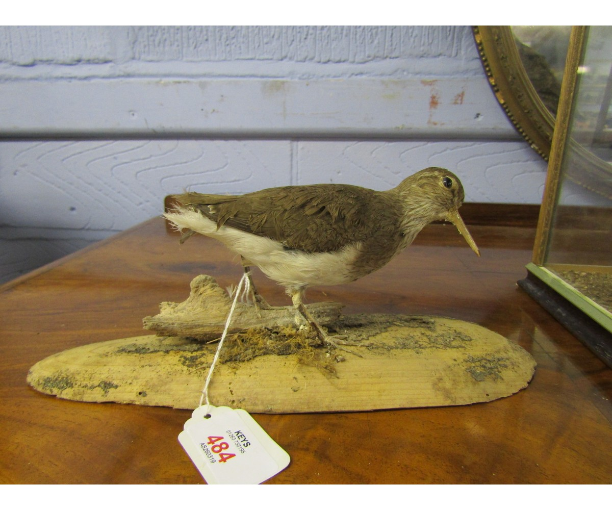 Lot 484 - Uncased Wader mounted on naturalistic base 4 ins high