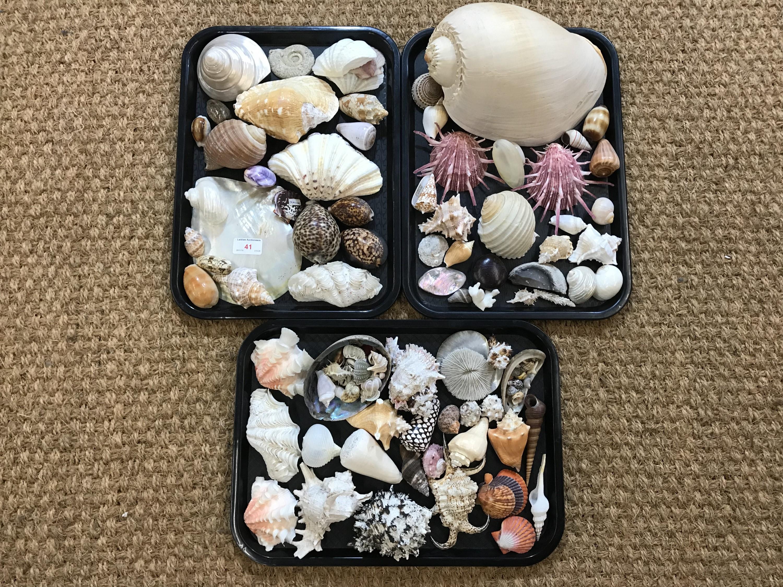 Lot 41 - A large quantity of sea shells