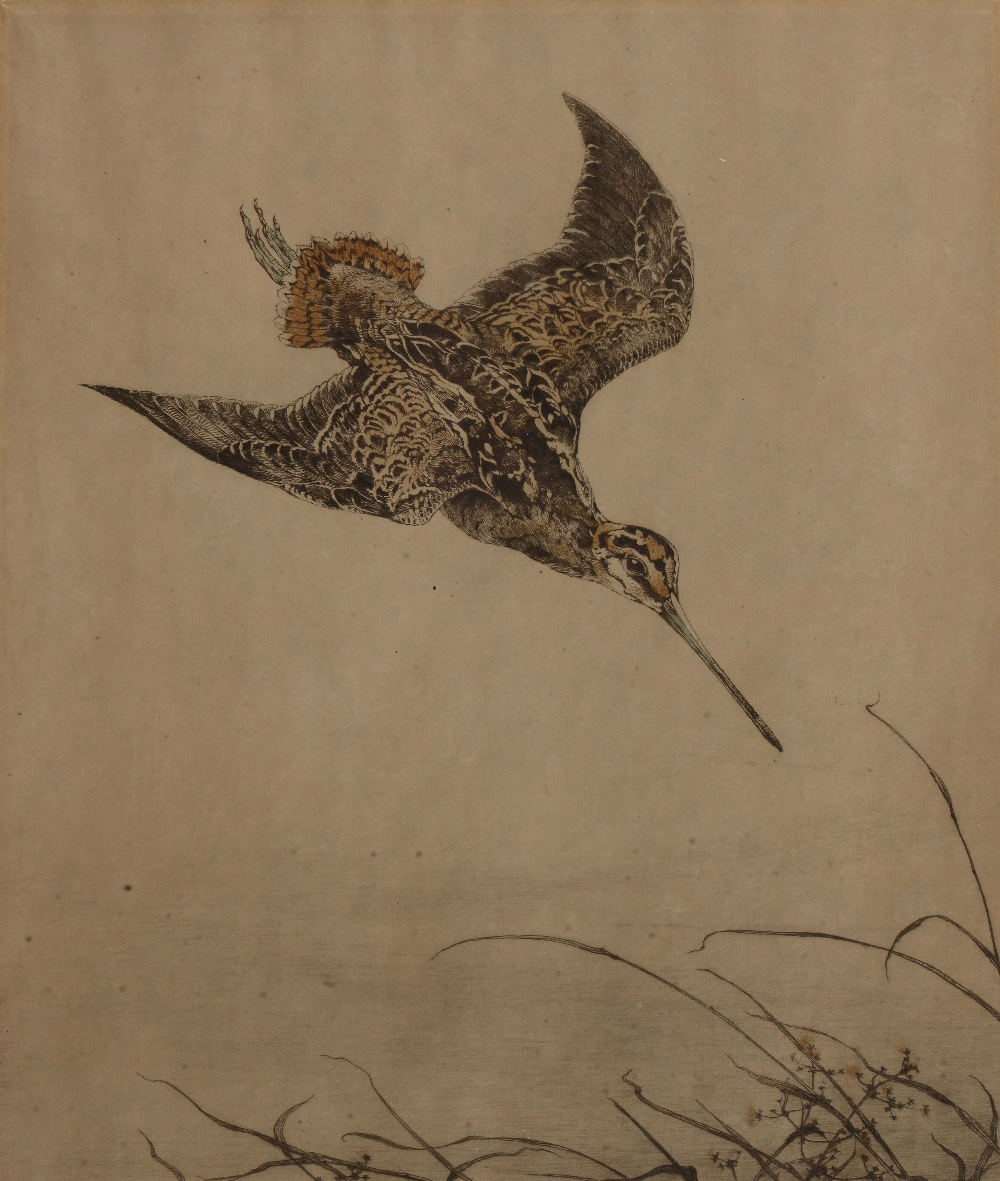 Lot 92 - WINIFRED AUSTEN (1876-1964) 'Snipe', etching in colours, pencil signed in the margin and titled,