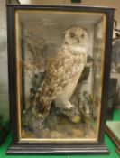 A taxidermy stuffed and mounted Long-Eared Owl in naturalistic setting on stump mount,