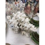 A large piece of white coral
