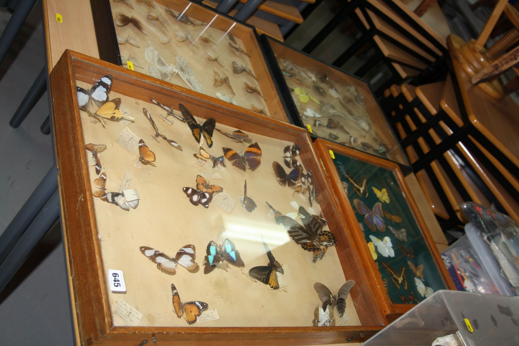 Lot 645 - ENTOMOLOGY INTEREST, four cases of butterfly and moth specimens (4)
