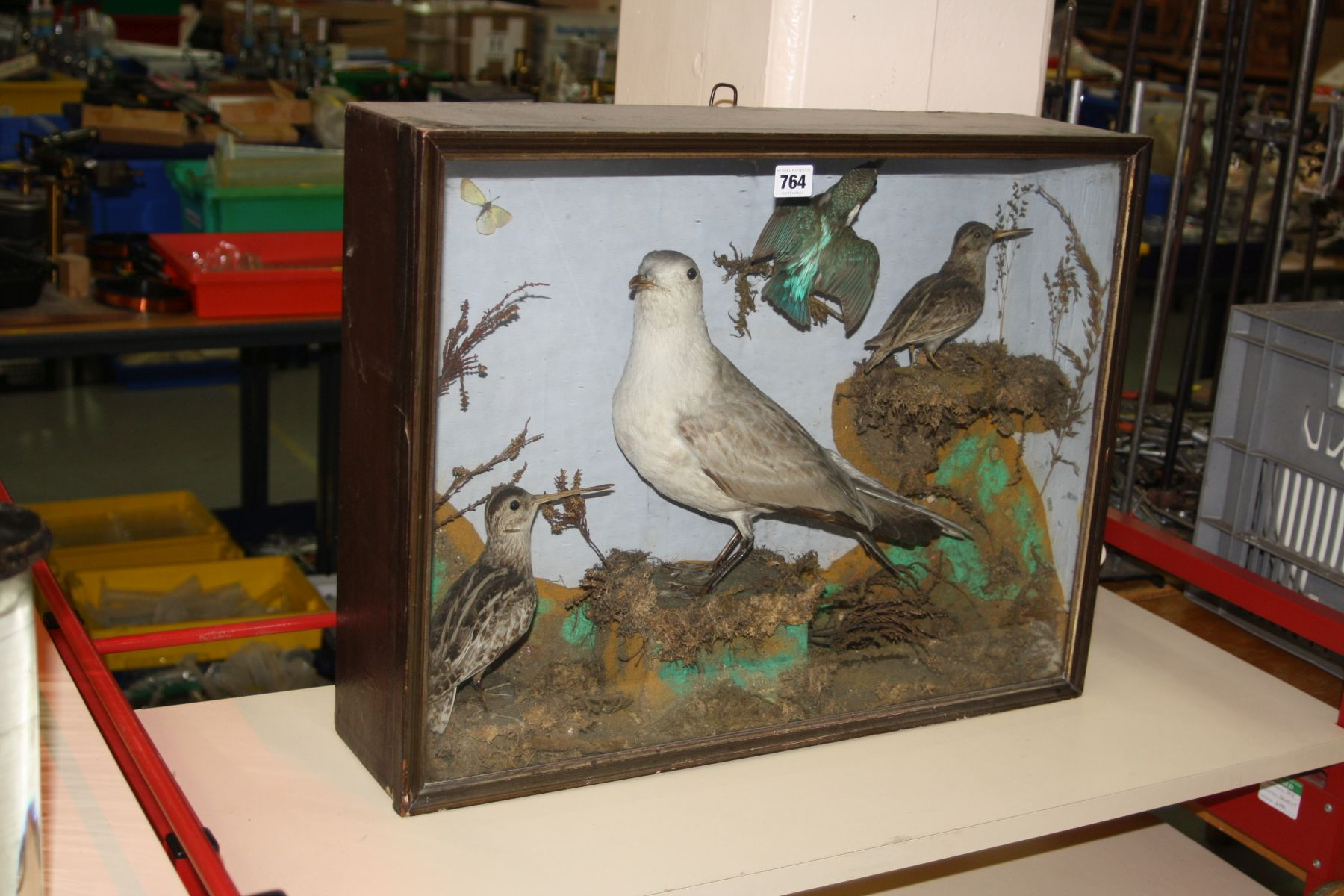 Lot 764 - TAXIDERMY - a Victorian glazed case containing a gull, kingfisher and two other birds in a