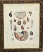 A pair of decorative sea shell prints, framed and glazed,