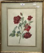 NICOLE HORNBY (20th century) British, Rose Hugh Dickson, watercolour, signed, framed and glazed,