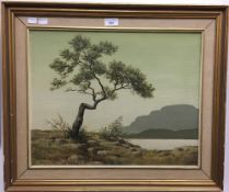 S G ANDERSON (20th century) British, Tree Study, oil on canvas, signed and titled to verso,