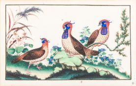 CHINESE SCHOOL (19th century) Exotic Birds Amongst Flowers Bodycolour on rice paper,