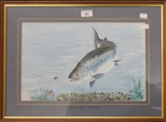 A framed and glazed watercolour of a Salmon taking a Fly