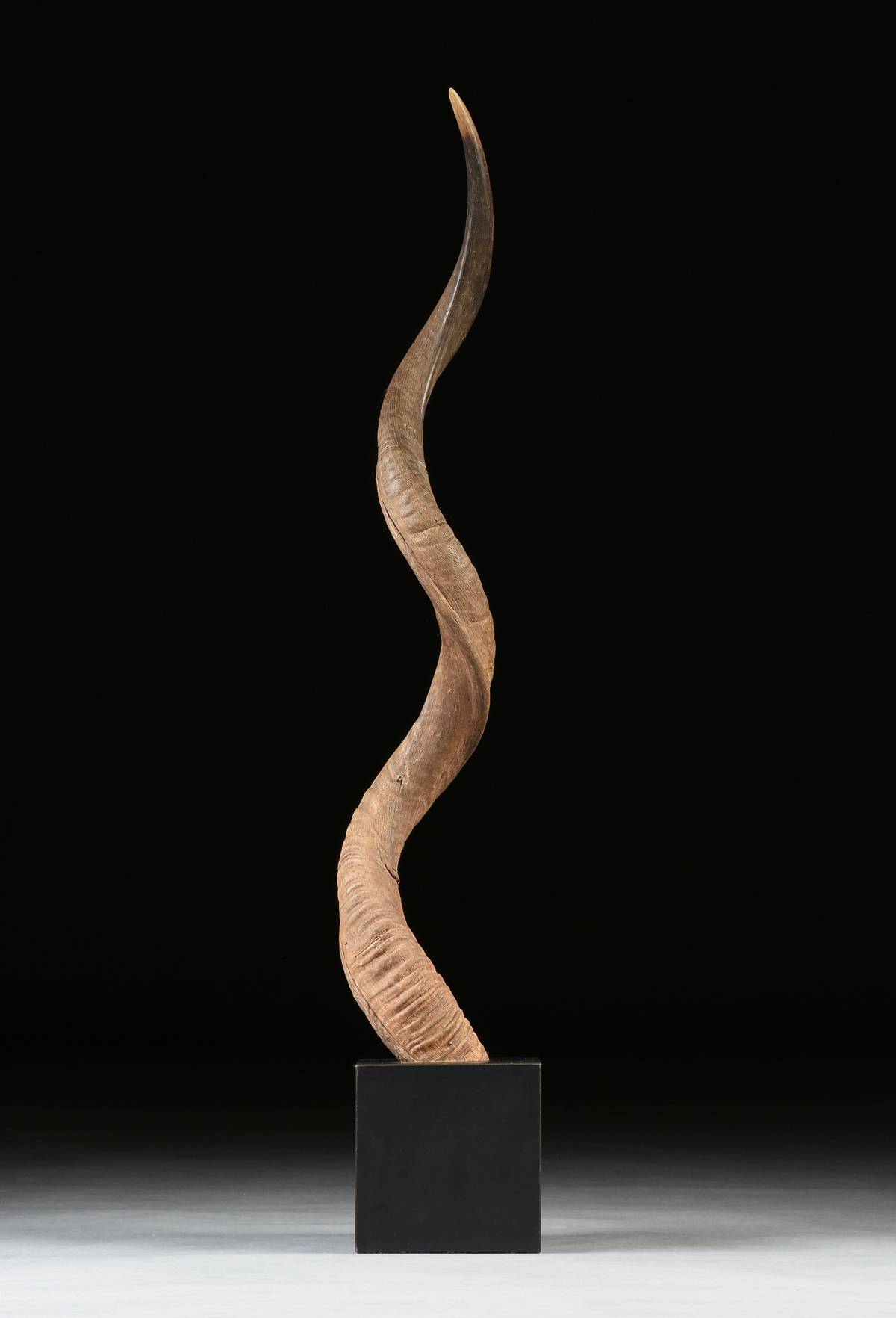 Lot 21 - A SPIRAL ANTELOPE OR KUDU HORN ON STAND, AFRICA, MID/LATE 20TH CENTURY, the single spiral horn