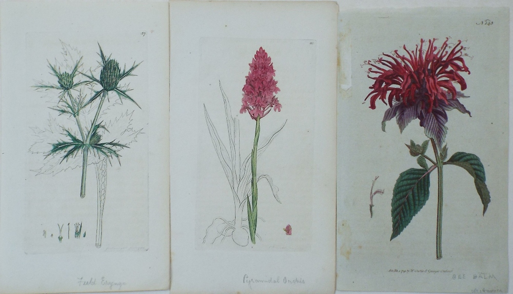 Lot 735 - A collection of unframed late 18th century coloured botanical engravings, probably book plates,