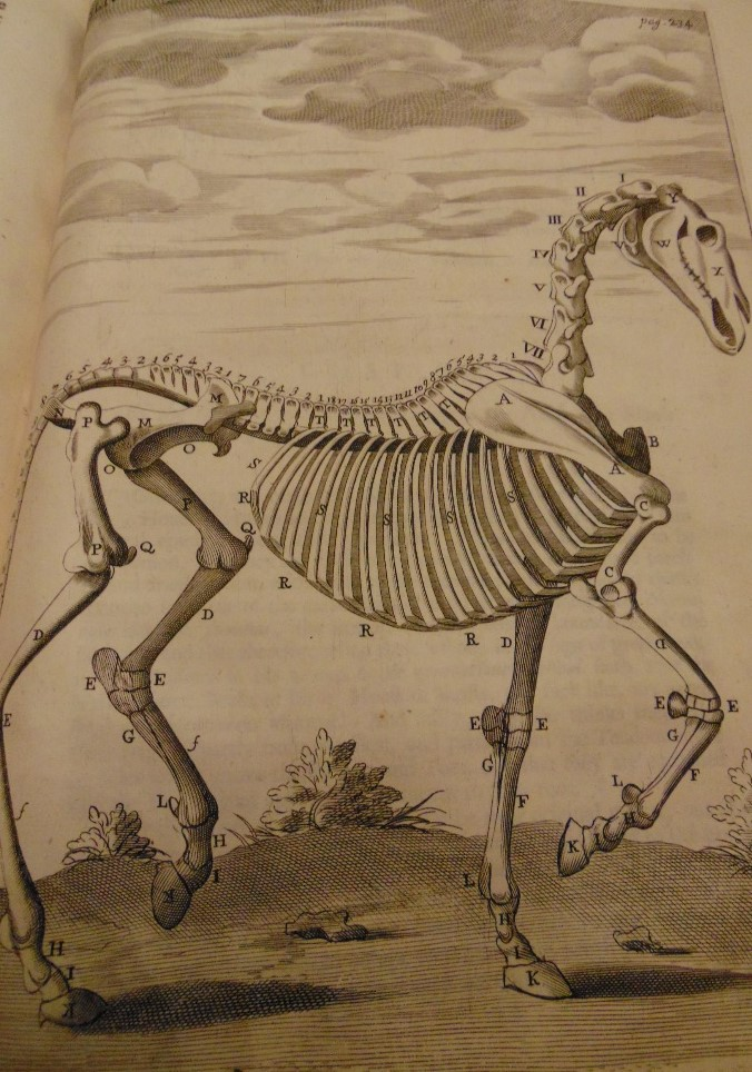 Lot 849 - SNAPE Andrew - The Anatomy of a Horse, printed for M Flefher, 1683, illustrated
