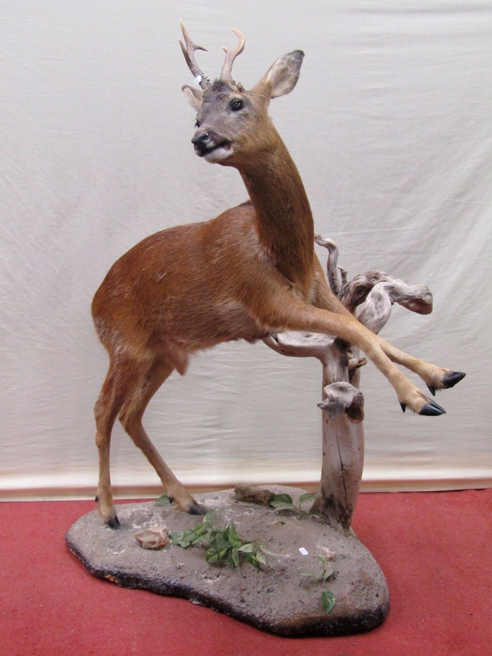 Lot 1560 - Taxidermy Interest - A Roe deer jumping a branch
