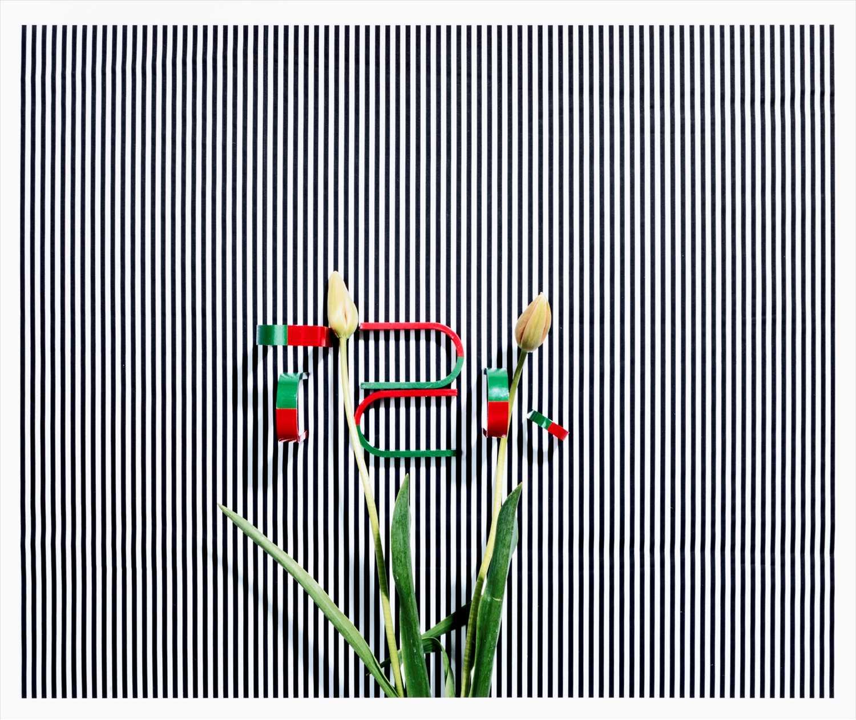 Lot 6 - Annette Kelm (German b.1975), 'Untitled (TZK)', 2013