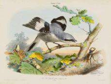 Traviès, Edouard: [Collection pittoresque des plus jolies oiseaux des quatre-parties du monde.