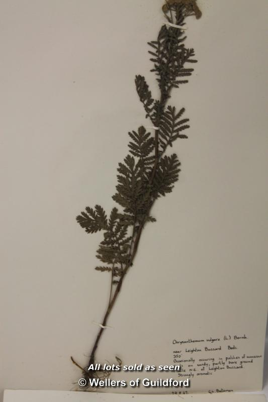 Lot 7474 - *Herbarium of approx 92 pressed plants, scientific collection circa 1967 (Lot subject to VAT) (