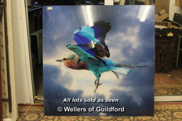 Lot 7245 - *Photograph of Lilac Breasted Roller, mounted under perspex, 91 x 90cm.