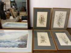 """Four original botanical studies together with a Keith Cast print """"from west bay"""" and a mirror."""