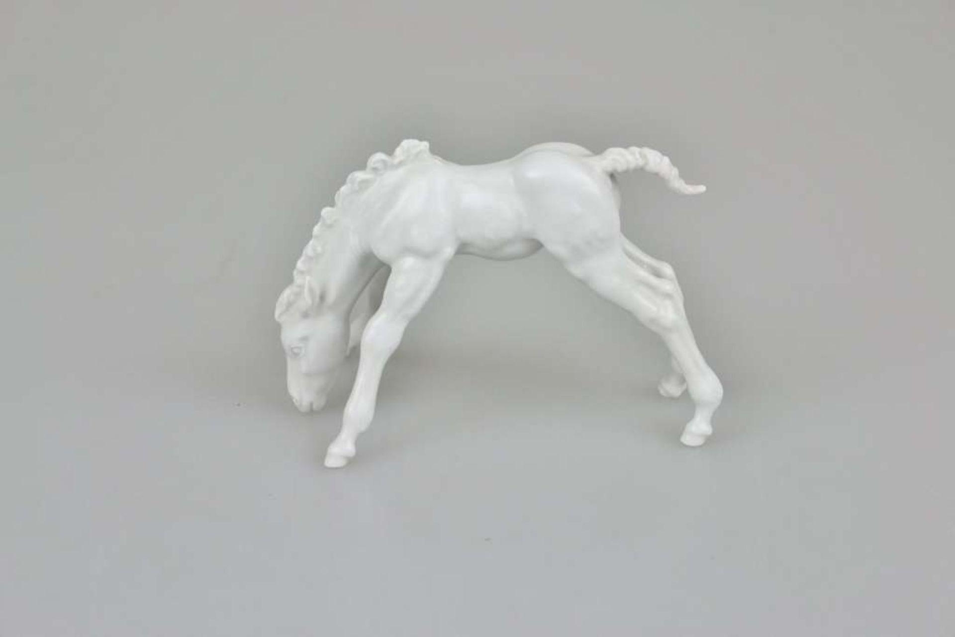 """Meissen Figur, 20. Jh., """"Grasendes Fohlen"""", Weißporzellan, glasiert, am Boden unterglasurblaue"""