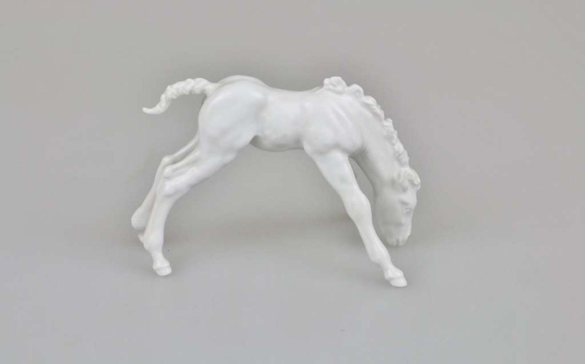 """Meissen Figur, 20. Jh., """"Grasendes Fohlen"""", Weißporzellan, glasiert, am Boden unterglasurblaue - Bild 2 aus 3"""