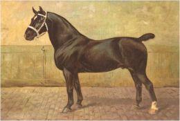 "Westerop, Wilhelm (1876- 1954) ""Rappe mit weißer Blesse"", Öl/Lw., Ritzsignatur u.l., 30x40cm,"