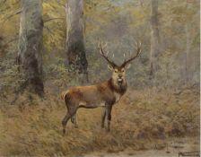"""Wunderlich, F. (20. Jh.) """"Hirsch im Sommerwald"""", Öl/SH, sign. u.r., 80x100 cm, Rahmen"""