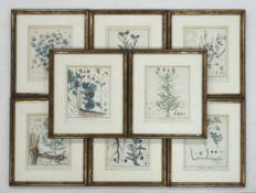 Konvolut Pflanzenstichekoloriert (von Guimpel und P. Haus), 24 x 19 cm, gerahmt unter Glas und