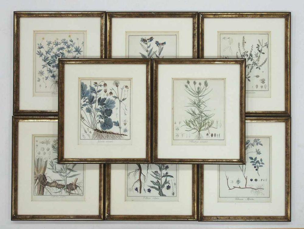 Konvolut Pflanzenstichekoloriert (von Guimpel und P. Haus), 24 x 19 cm, gerahmt unter Glas und Passepartout; insgesamt 8 Blatt