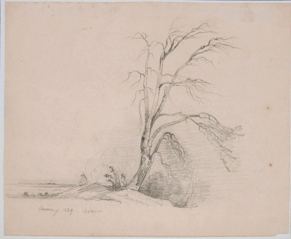 CHATAIGNER, Marie Amelietätig 18./19. Jh.BaumlandschaftBleistift auf Papier, signiert und datiert 1829 unten links, 21,5 x 25,5 cm (montiert im Passepartout, kleine Randbeschädigung)