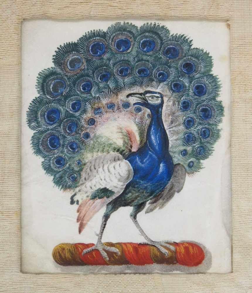 DEUTSCHER MEISTER17. Jh.PfauAquarell auf Pergament, 16 x 12,5 cm, gerahmt unter Glas und Passepartout (verso bezeichnet