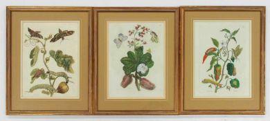 MERIAN, Maria Sybilla1647-1717Indischer Pfeffer / Cashewnuß / Feigen3 Kupferstiche, koloriert, von