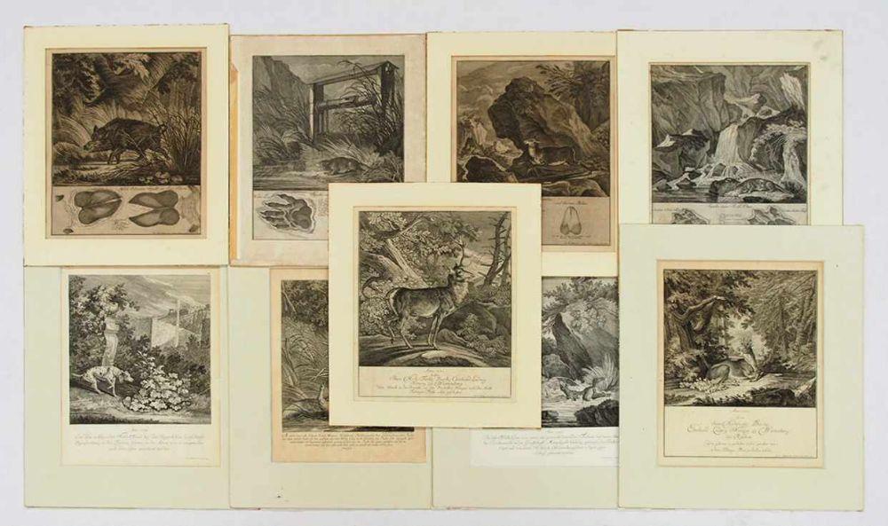 RIDINGER, Johann Elias1698-1767Neun BlattKupferstiche, 4 Blatt aus: Abbildung der jagtbaren Thiere mit derselben angefüghten Faehrten und Spuhren... Augsburg 1740 (1 Blatt aufgezogen) sowie jeweils e