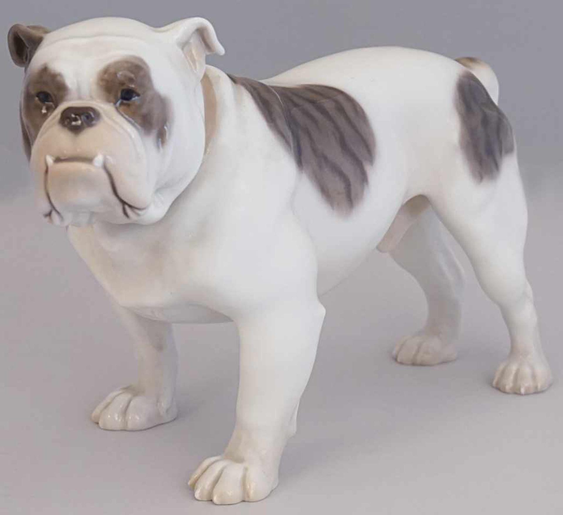 "Figur Porzellan BING & GRONDAHL Dänemark ""Englische Bulldogge""Entwurf wohl DAHL Jensen"