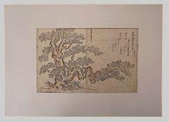 """1 Doppelbuchseite/Holzschnitt col. """"Japanische Kiefer"""" mittig sign./unten bez. Tachibana MORIKUNI"""