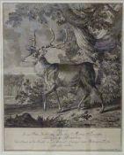 Johann Elias Ridinger, je i.d.Pl.sig.